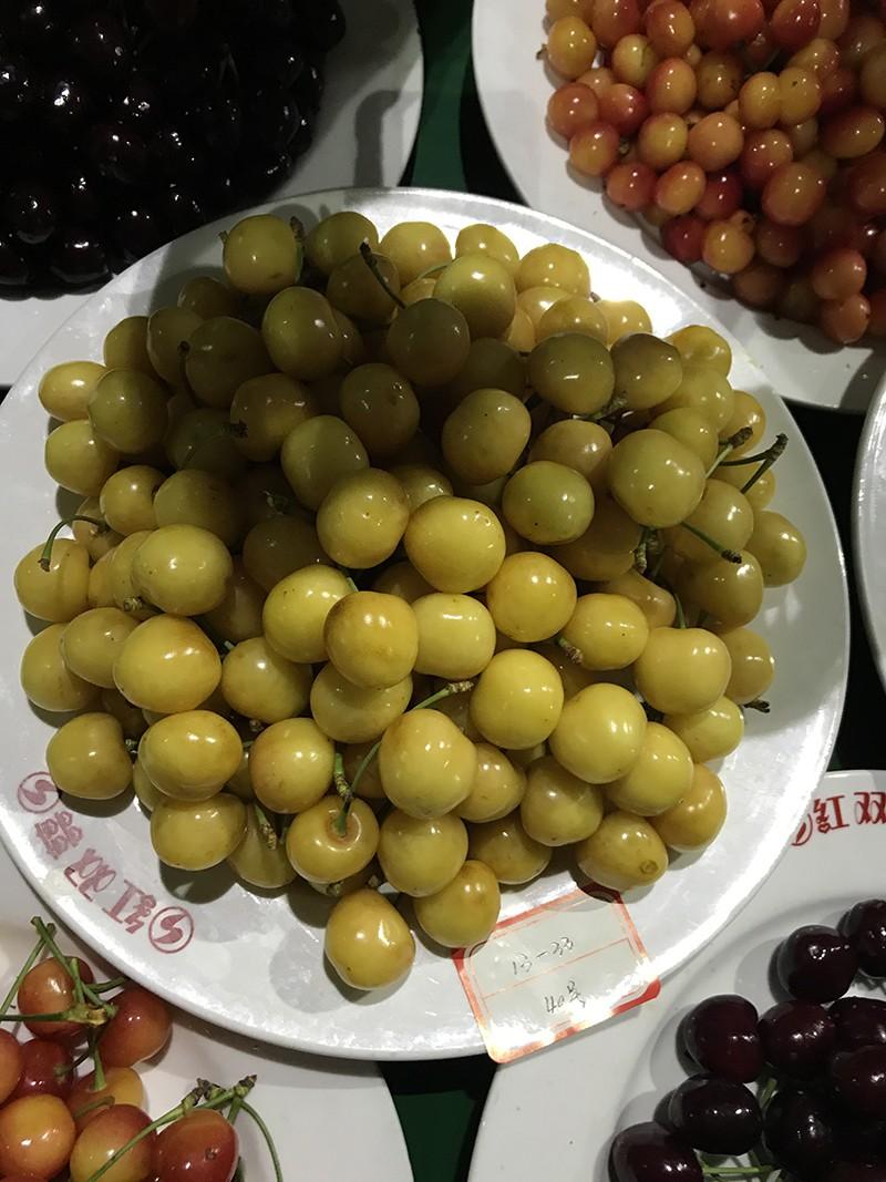 潍坊白樱桃